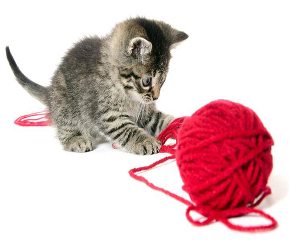How To Select Cat Toys