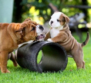 Puppy Behaviors: How to deal with it?