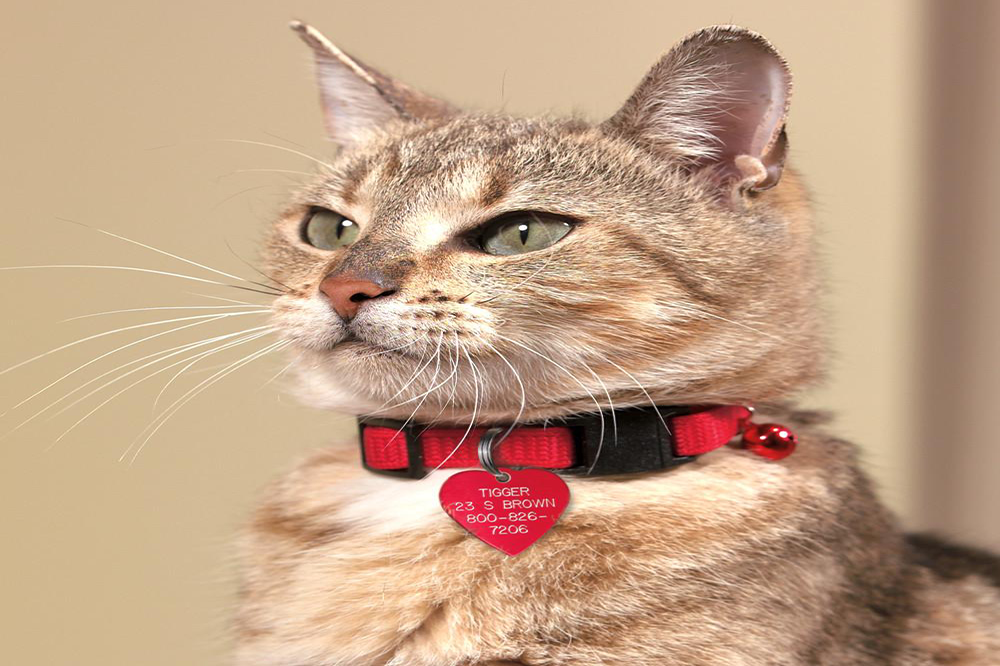 Finding The Ideal Cat Collar