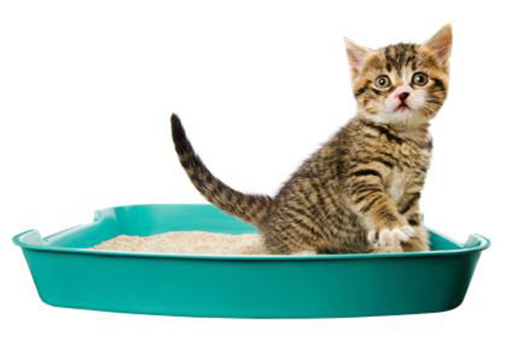 At Last! Cat Litter Boxes Don't Have To Be Evil