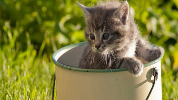 Keeping Cats Out Of Your Garden
