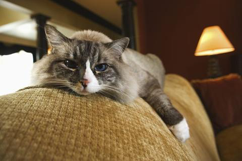 Aging Cats' Nutritional Needs Change After Age 11
