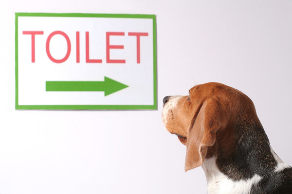 6 Great Tips For Getting Your Dog Toilet Trained