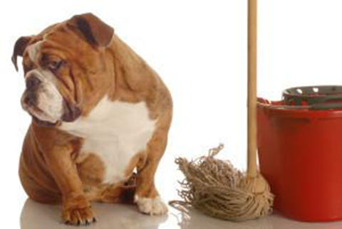 A 7-Step Housetraining Guide For Your Puppy (Part 3)