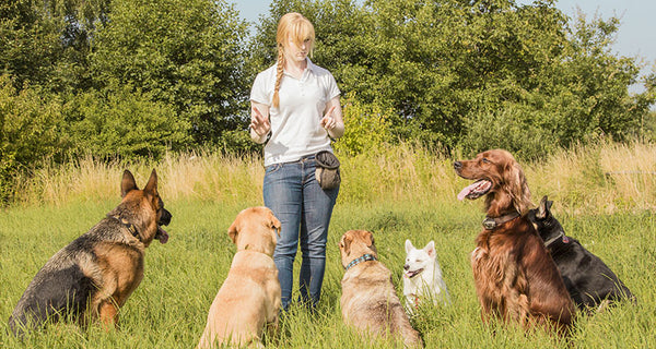 6 Easy Ways To Find A Good Dog Training Professional