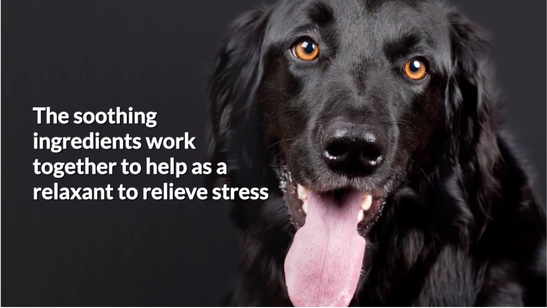 Dog Calming Treats- How To Relax My Dog