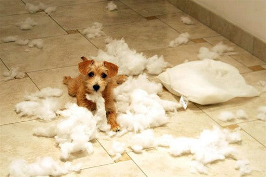 Destructive Puppy On The Loose
