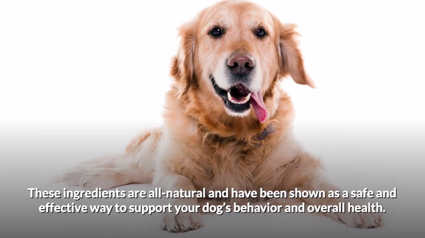 Are Dog Calming Treats Safe?