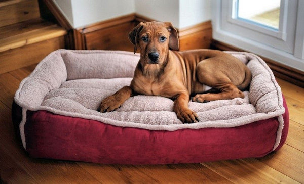 A Look at Discount Dog Beds