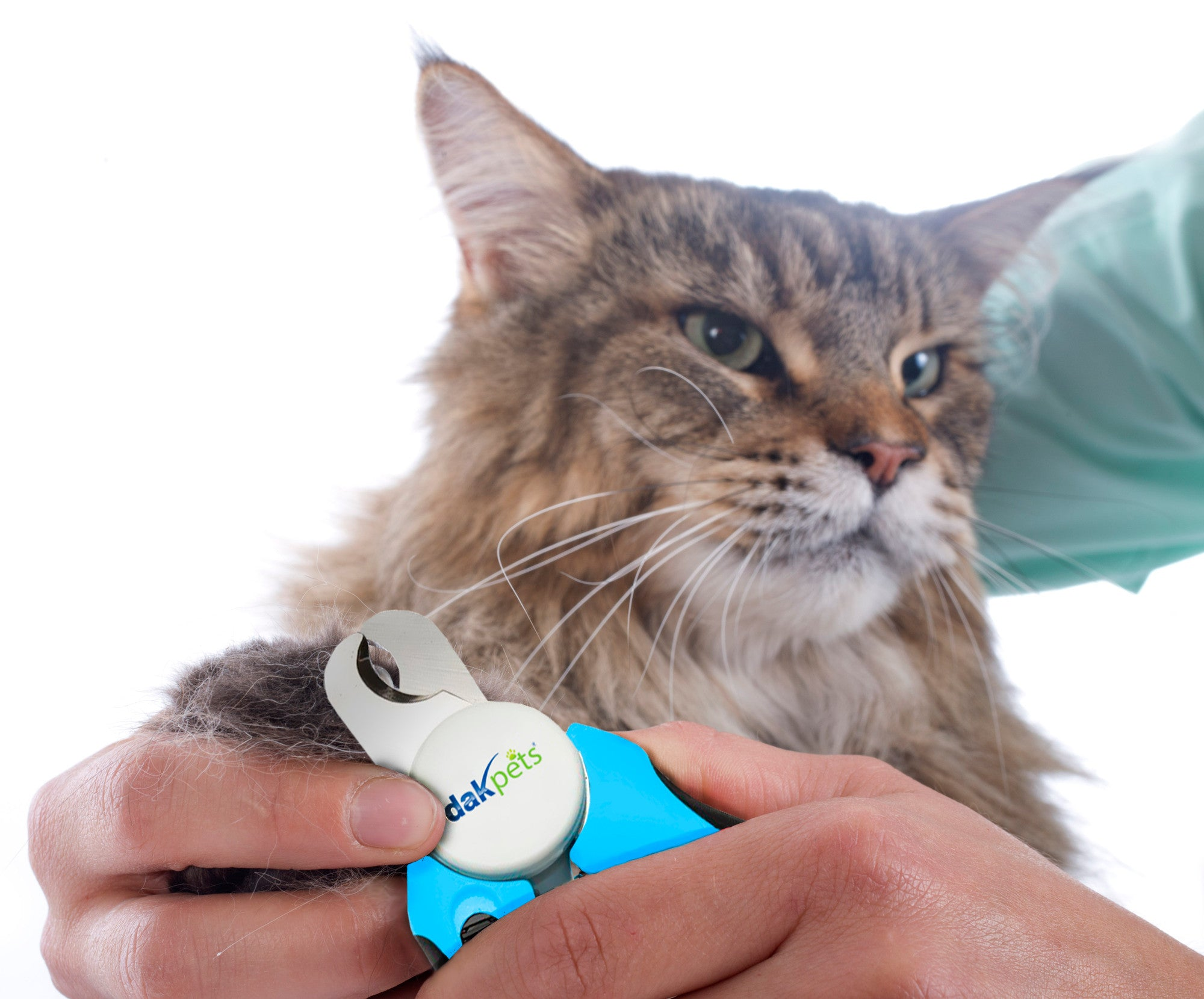 Cat Health and Cat Care