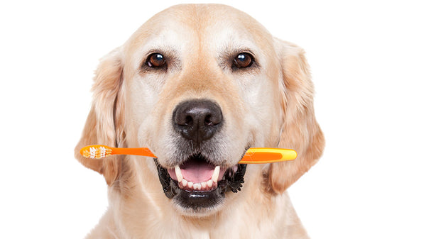 Brush Up On Your Dog's Dental Health