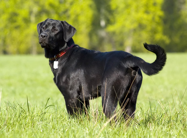 Beyond Blackey & Smokey - 10 Great Ideas for Naming Black Dogs