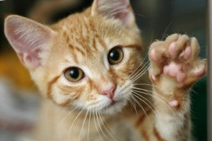 Nail Clipping Tips for Our Lovely Pets