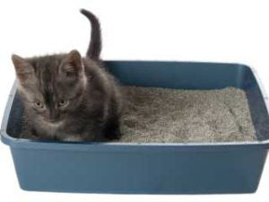 Cat Care 101: Keeping Your Cat Healthy and Your Home Clean