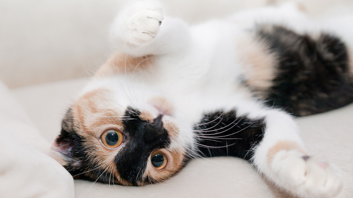 Is Your Cat Behaving Badly?
