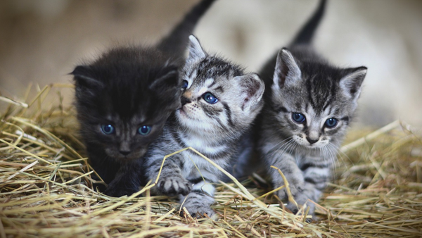 Overview of Cat Breeds