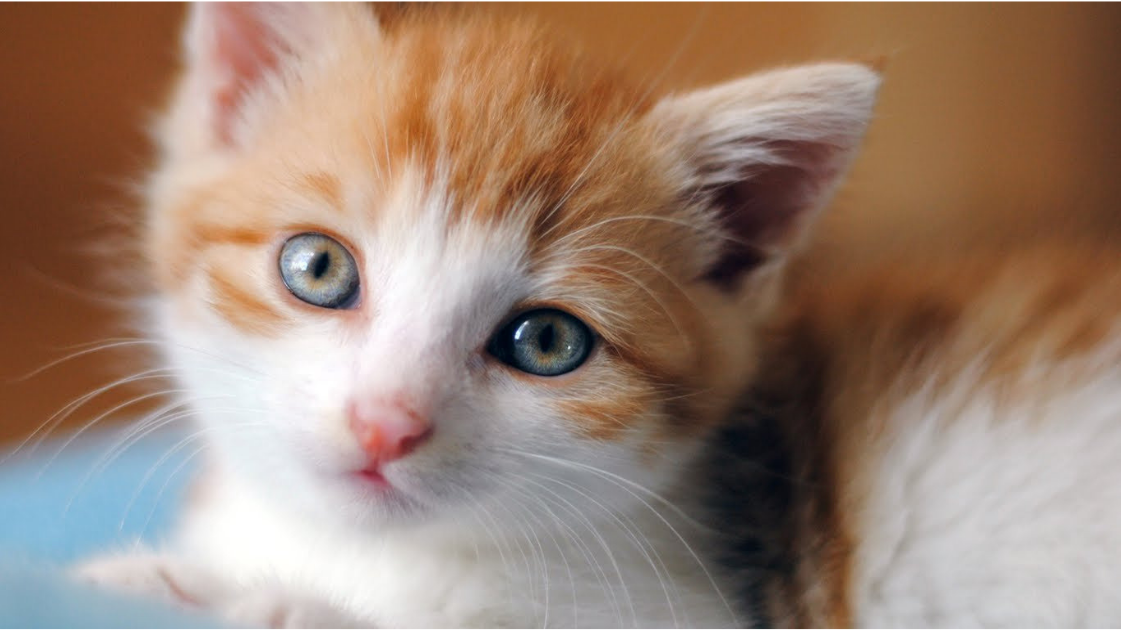 Choosing a Cat Litter For Your Aging Cat