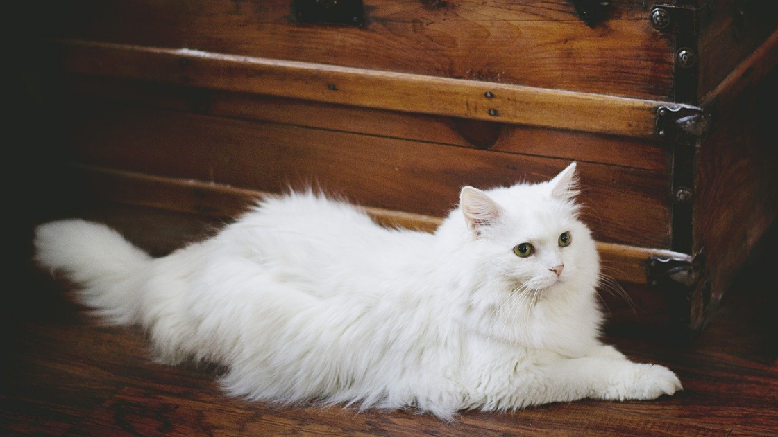 Feline Fur: How To Properly Manage Your Cat's Hair