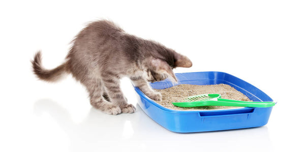 Litter Cleaning For Cats
