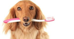 Dental Cleaning Tips for your Pet