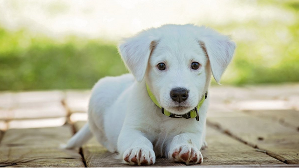 4 Puppy Training Techniques That Are a Cinch for Dog Parents