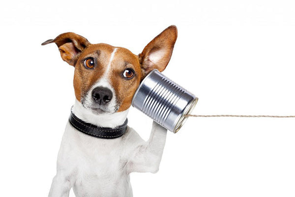A Dogs Communication - Could Your Dog be Trying to Tell You Something?