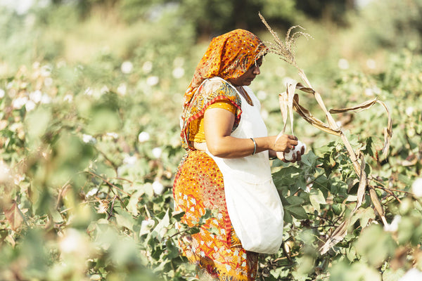 Growing Organic Cotton in India