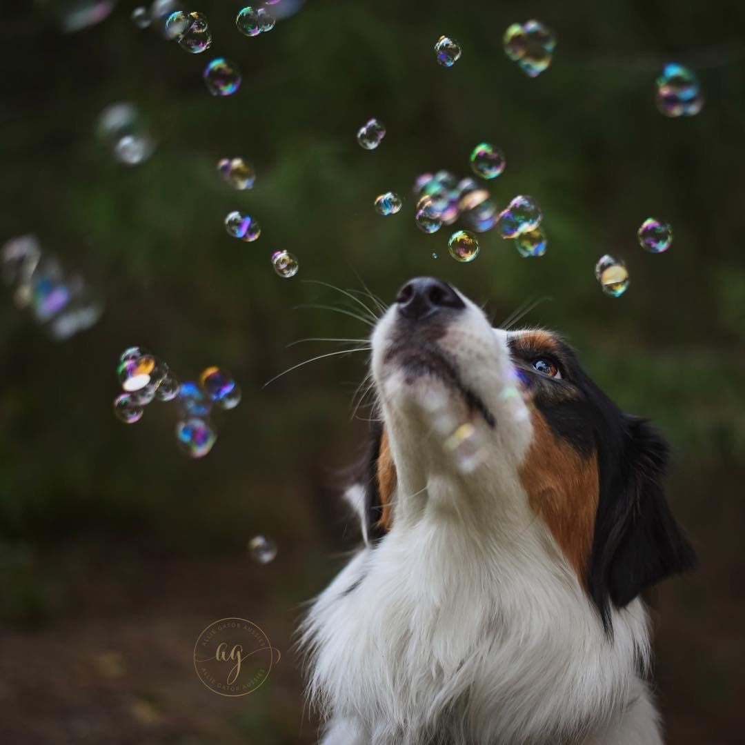Doggy IncrediBubbles™ with Peanut Butter Infused