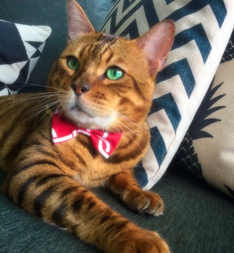 Kitty Bow Tie Red with white links