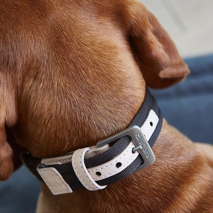 Riva Dog Collar