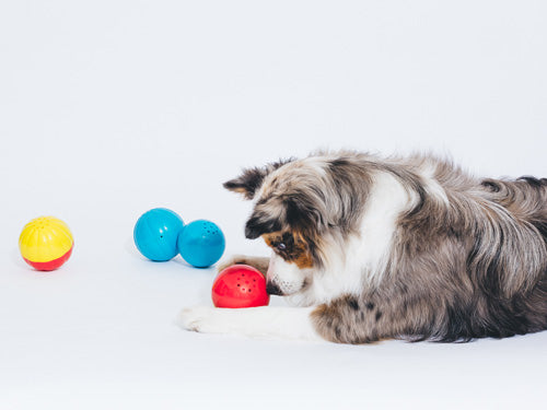 Talking Babble Balls® Dog Toy