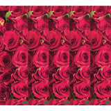 Mob Roses Are Red Skateboard Grip Tape 9 x 33