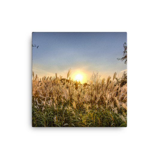 Canvas Print Cattails - Canvas Print by Garth Fuerste Photography - TheDarkSlide