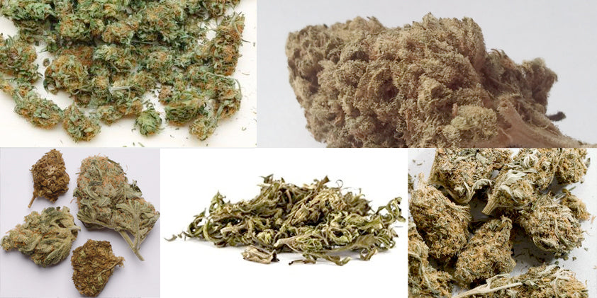 examples of bad weed
