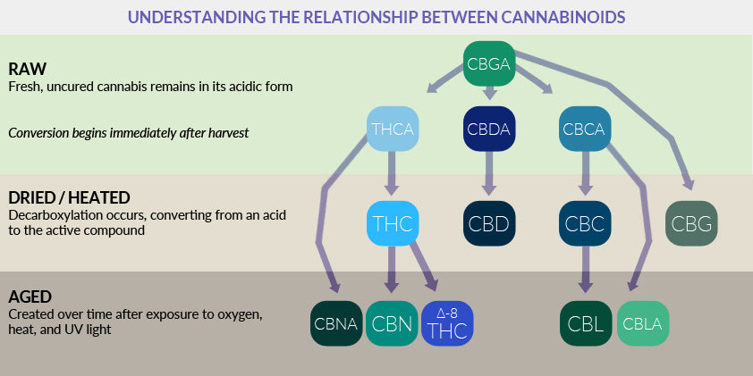 relationships between cannabinoids