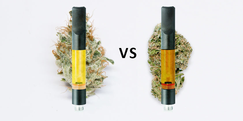How to Evaluate Weed Quality – Key to Cannabis
