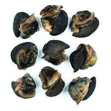 Dried Snails (4Count)