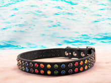 rainbow dog collar_lgbtq_made in USA