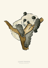 Load image into Gallery viewer, Giant Panda Print