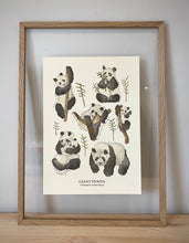 Load image into Gallery viewer, Giant Panda (group) Print