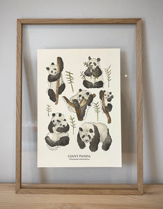 Giant Panda (group) Print