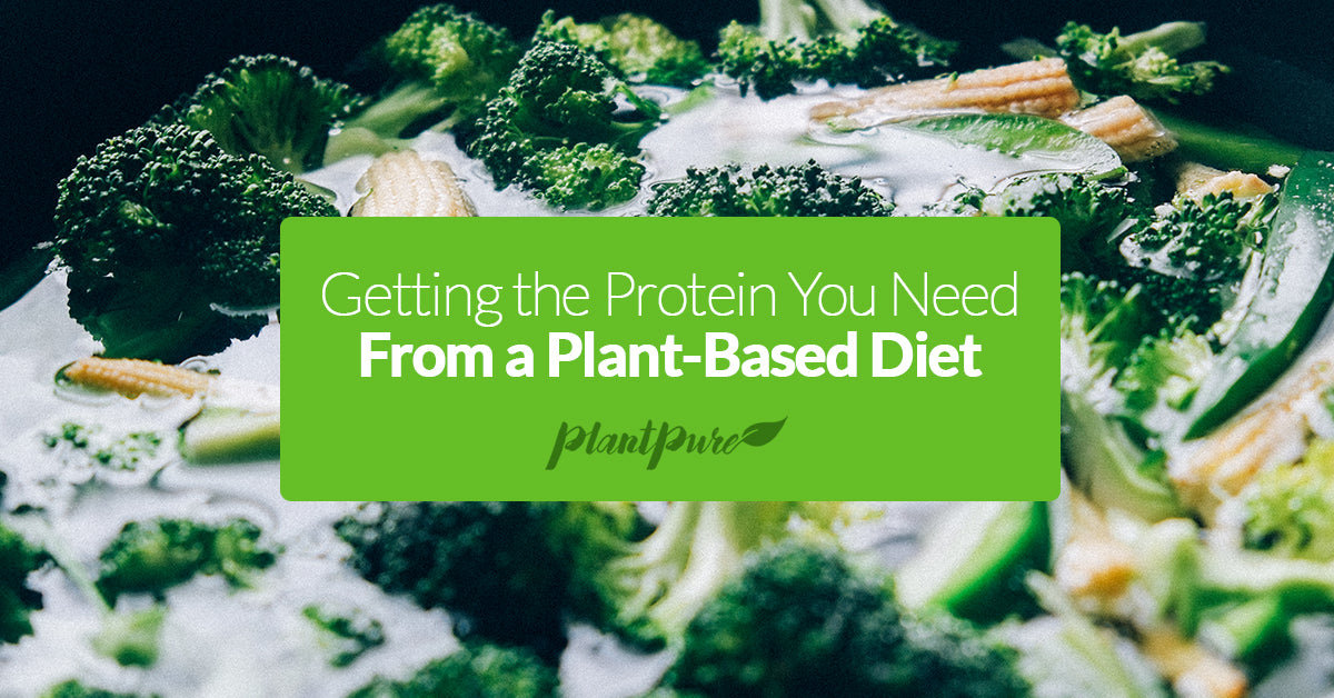Getting the Protein You Need From a Plant-Based Diet
