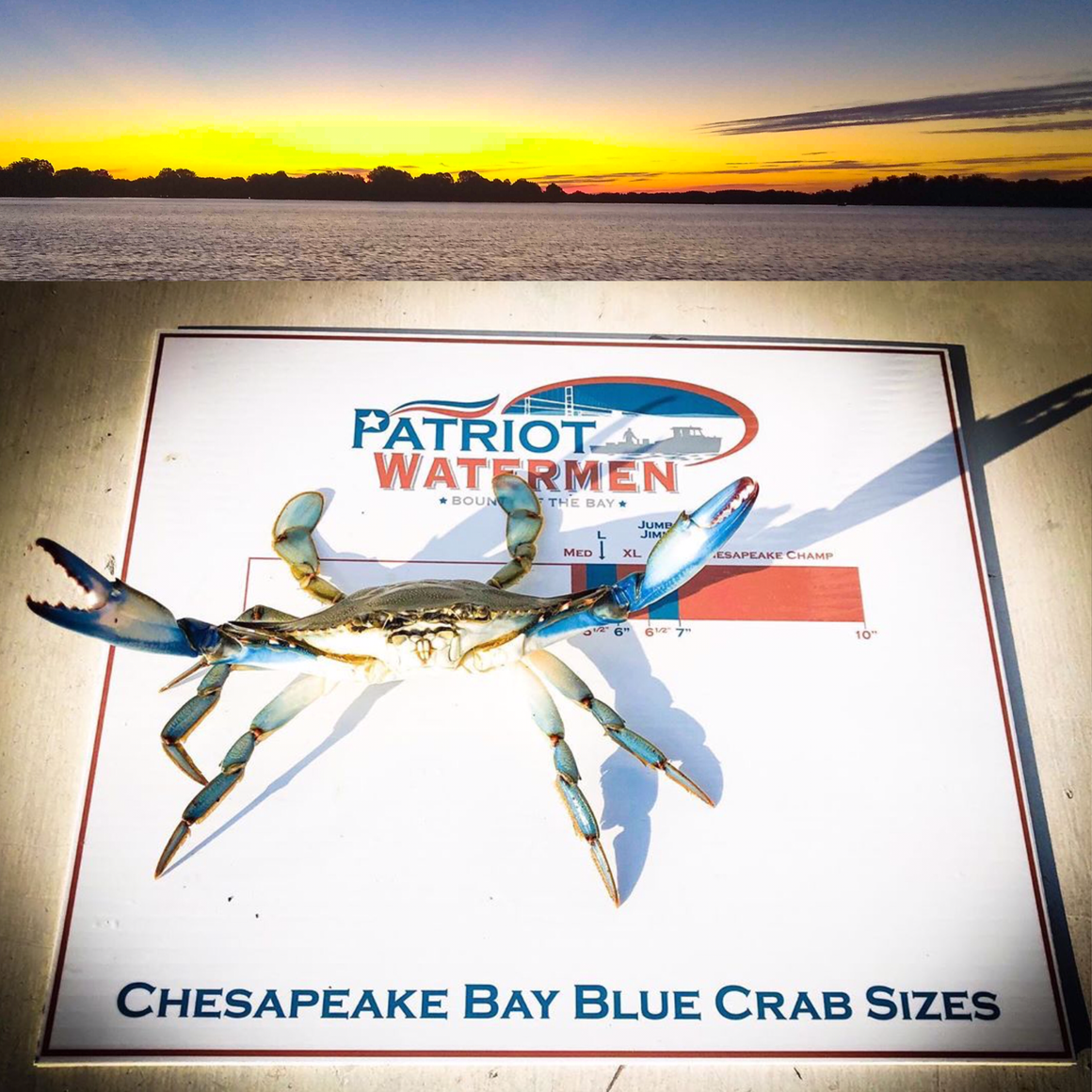 Chesapeake Bay Blue Crabs - By The Dozen