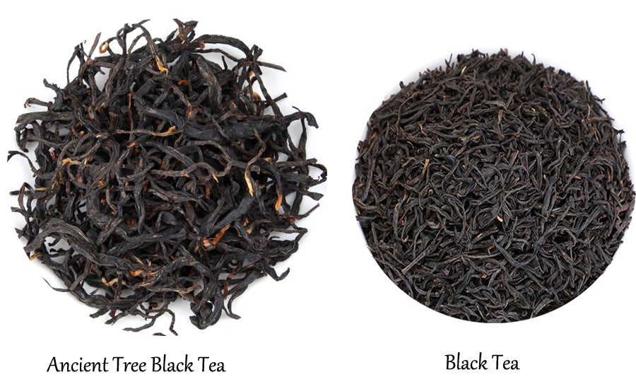 Ancient Tree Black Tea vs Normal Black Tea
