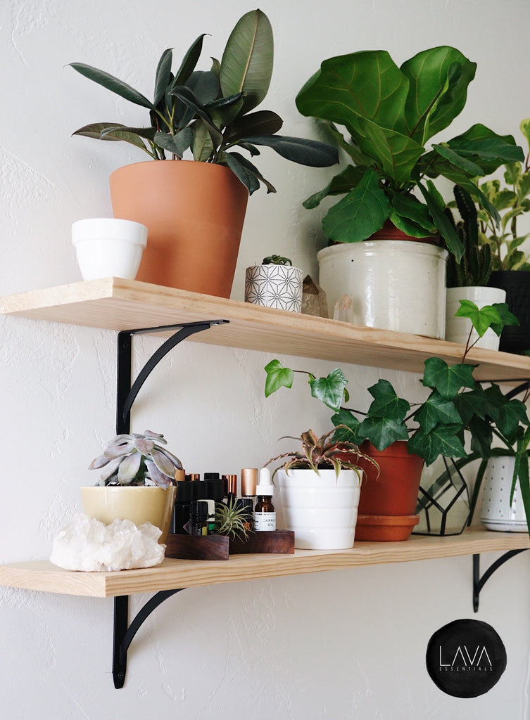 plant shelf, essential oil display, essential oil shelf, moon tray, succulent, rubber plant, ivy, fiddle fig, cactus