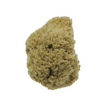 Sustainable Sponges - Natural Body Sponge