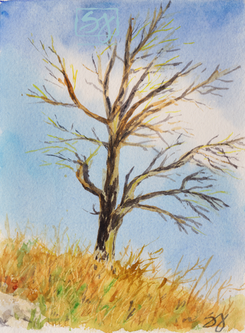 "Tree Dark and Light 5.25"" x 7.25"" Watercolor"