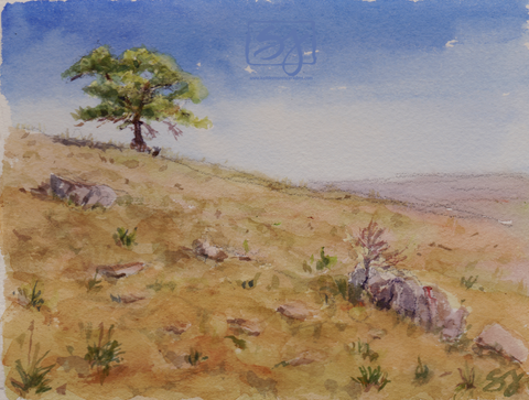 "Tree Overlooking Boulder 5.25"" x 7"" Watercolor"