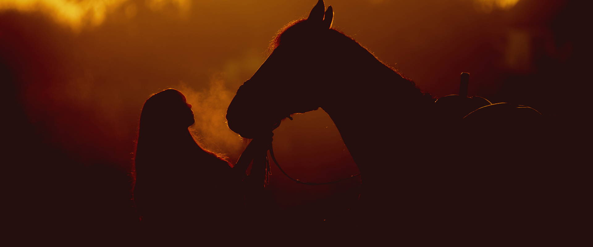 Choosing The Right Horse Boots For Your Animal