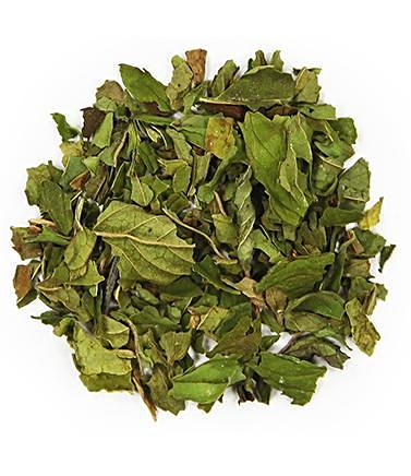 NORTHWEST PEPPERMINT LOOSE LEAF - GREEN TEA